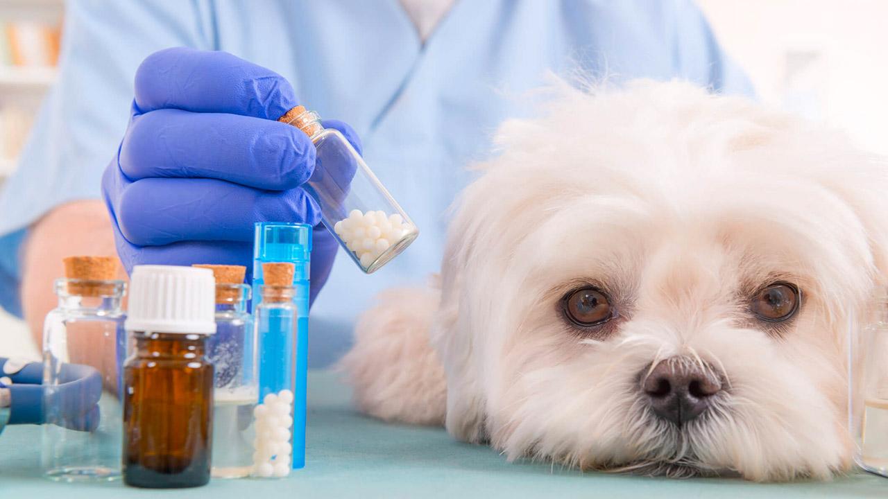 report antibiotici ad uso veterinario
